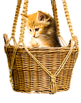 animal, cat, basket