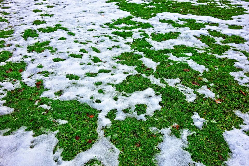 Snow, Olvadó Hó, Winter, A Hó A Fű, Olvadáspont, Fű