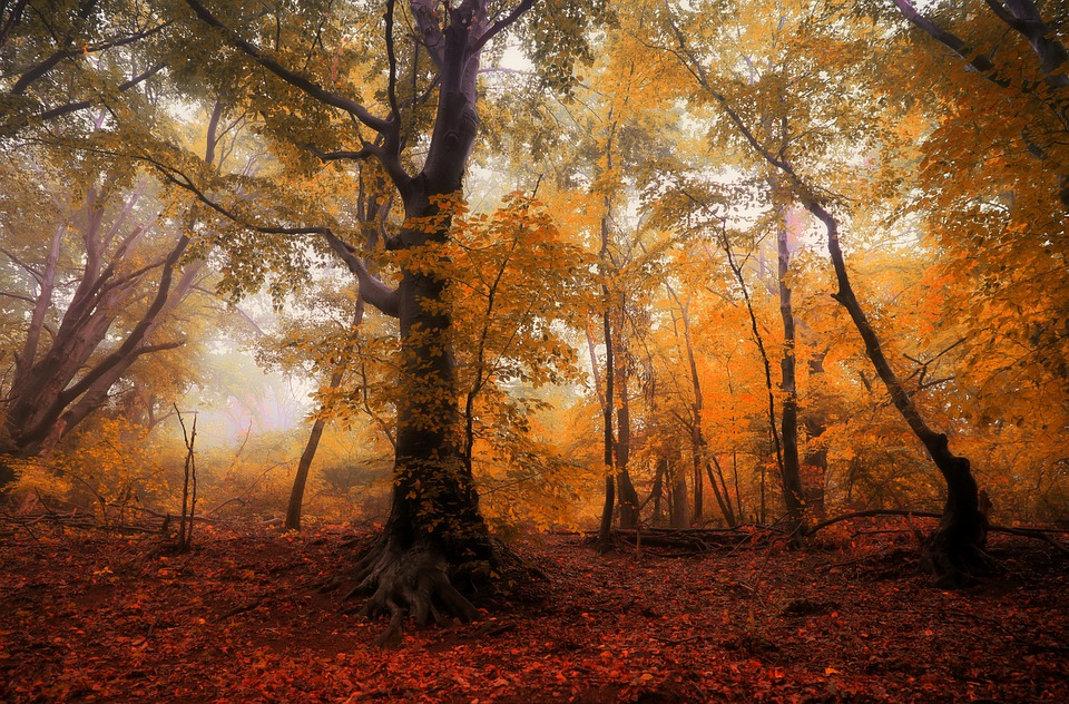 Forest Autumn Trees Free Photo On Pixabay