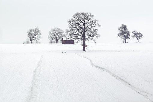 Winter, Winter Scene, Landscape, Wintry