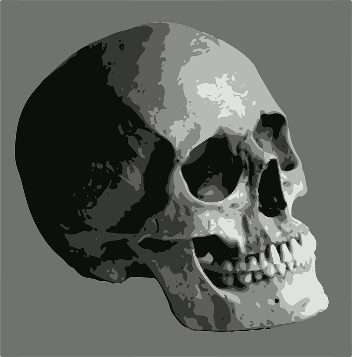 Skull Bone Frame · Free image on Pixabay