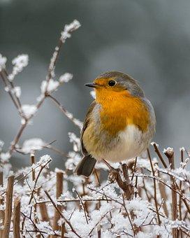 Tierwelt, Vogel, Singvogel, Baum, Natur