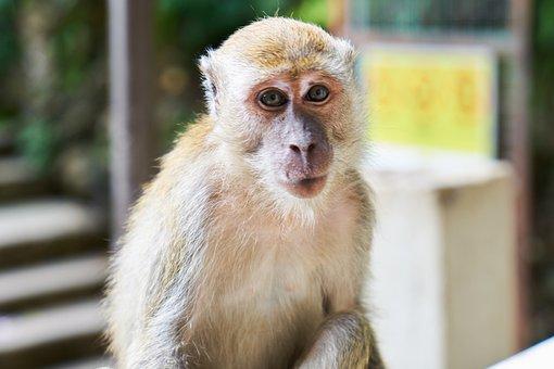 Küçük Maymun Resimler ücretsiz Resimleri Indir Pixabay