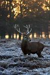 deer, winter, nature