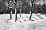 trees, winter