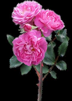 flores im genes gratis en pixabay. Black Bedroom Furniture Sets. Home Design Ideas