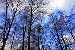 trees, tree tops