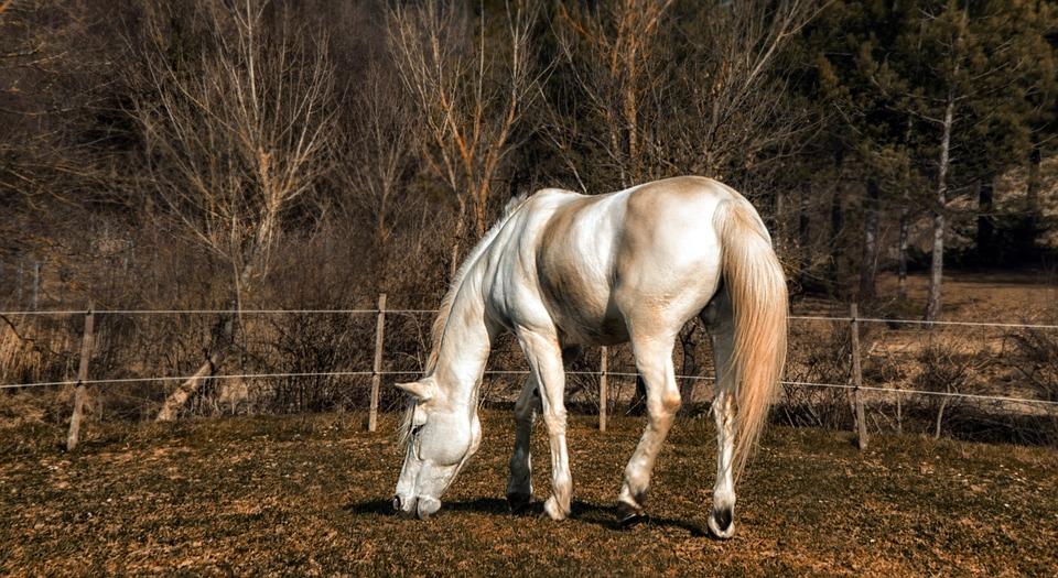 pferd nackt