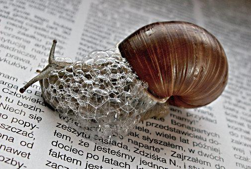 Nature, Newspaper, Snail, Newspapers