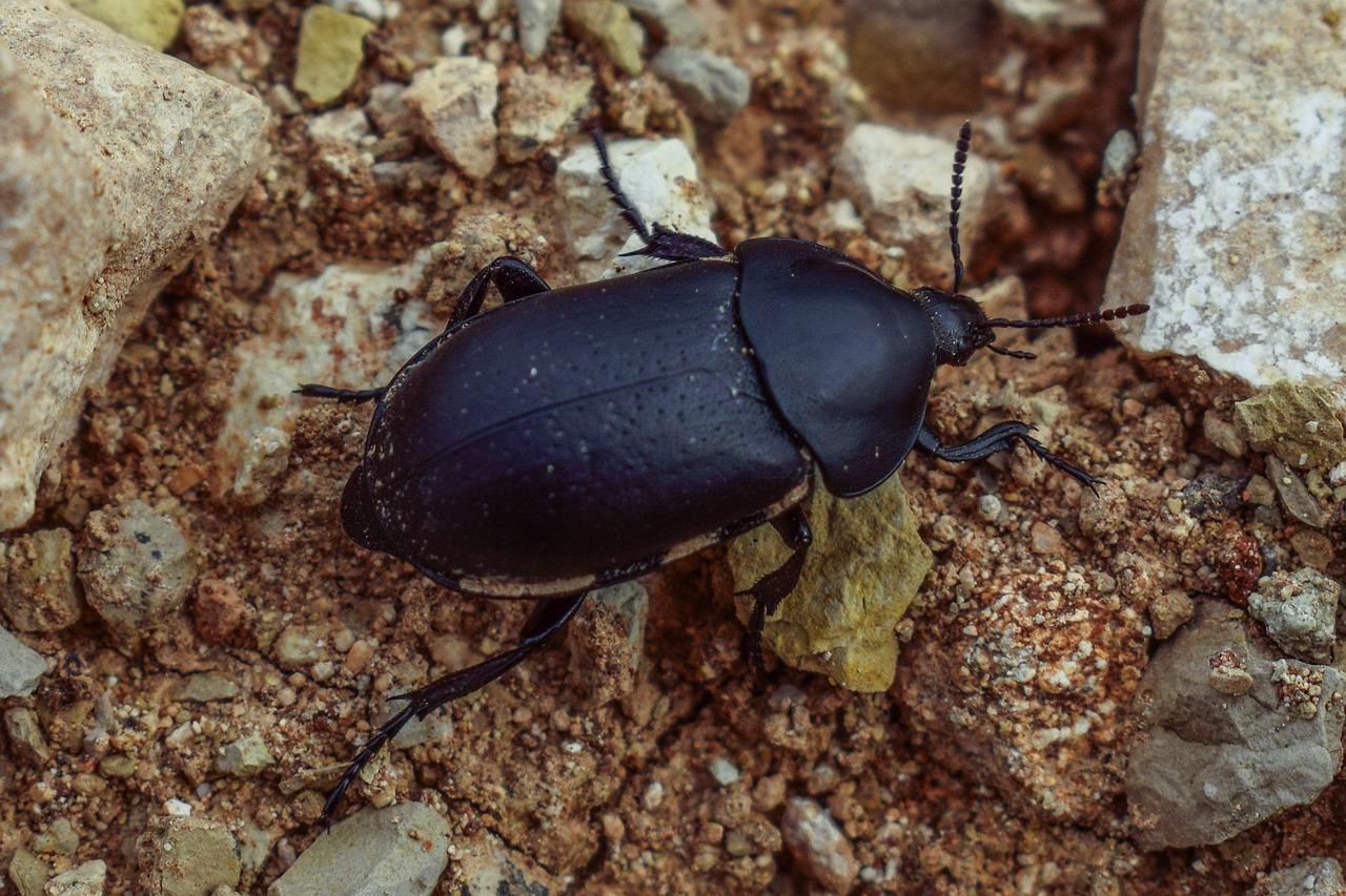 собрали крупные земляные жуки фото и названия белоснежка набредает хижину