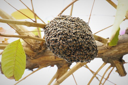 Beehive, Bee Nest, Bee, Insect, Animal