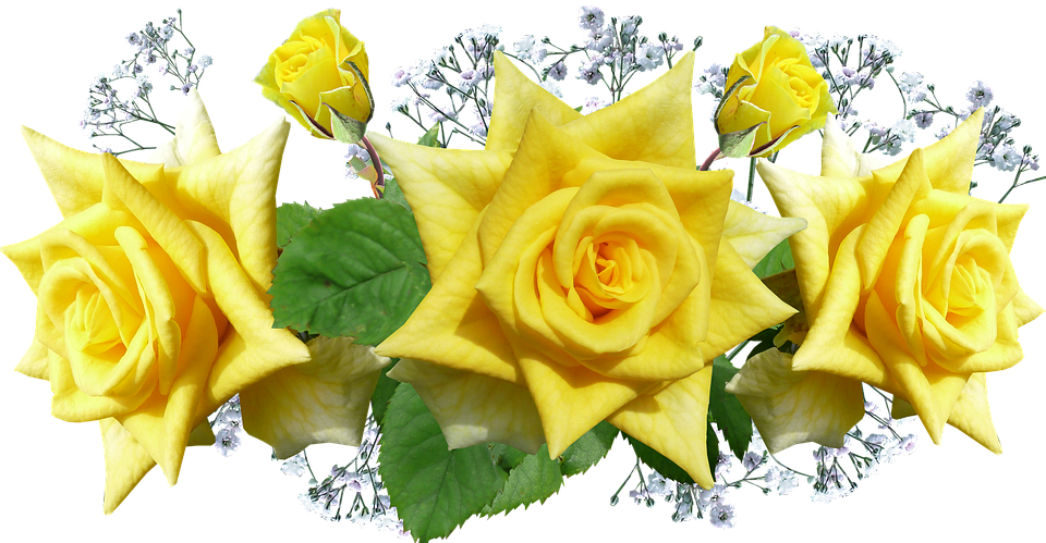 Roses yellow flowers free photo on pixabay roses yellow flowers decoration mightylinksfo