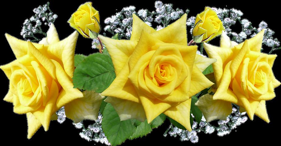 Картинки желтых роз на прозрачном фоне, февраля прикольные рисунки