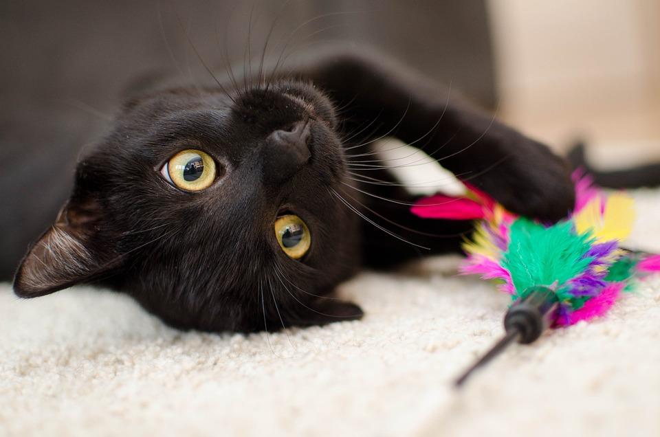 Gato, Relaxamento, Animal De Estimação, Gato Doméstico