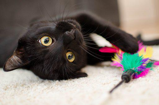 2 000 Free Black Cat Cat Images Pixabay