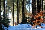 wood, tree, nature