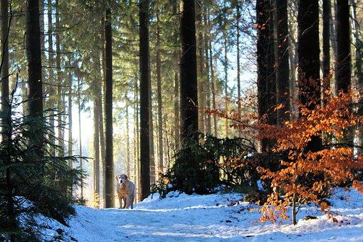 Wood, Tree, Nature, Season, Fog