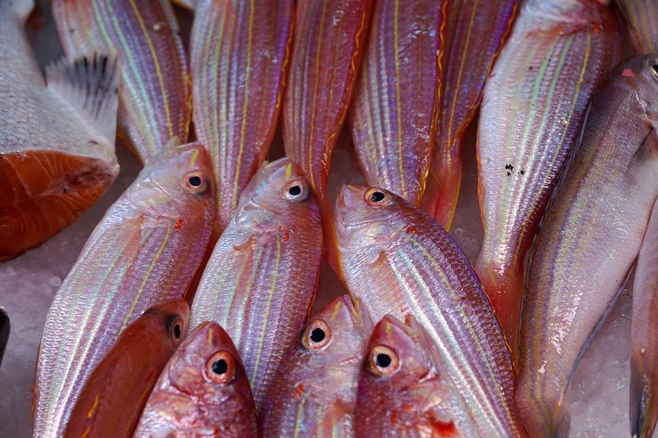 Fish, Seafood, Sea, Market, Ocean, Fish Soup, Soup