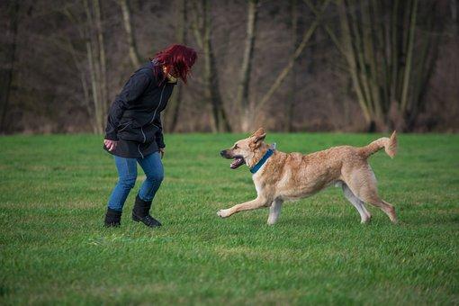 Dog, Grass, Pet, Mammal, Play, Agility