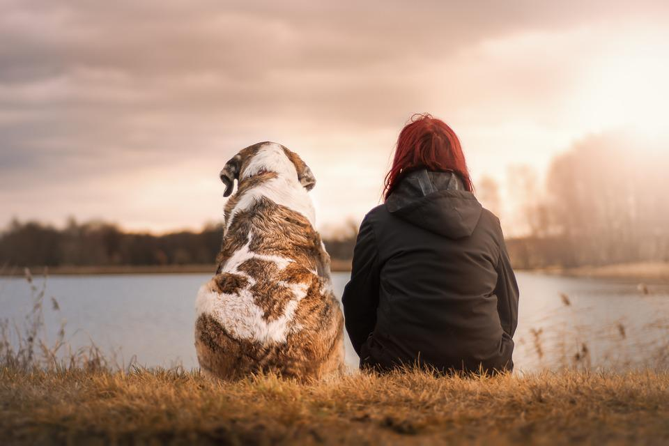 Friends, Dog, Pet, Woman Suit, Sunset, Human, Trust