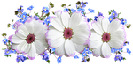 flowers, white, and blue