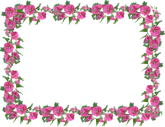 Frame Border Hollyhock 183 Free Photo On Pixabay
