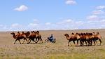 mongolia, desert, nomad
