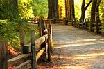 wood, fall, tree