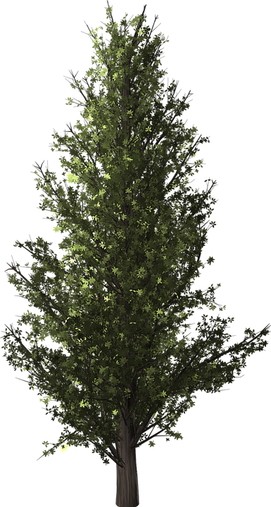 Image Result For Decorative Light Up Tree