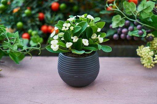 Plant, Flowerpot, Oxygen, Chlorophyll