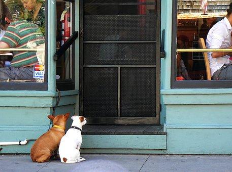 Dog, Human, Door, Input, Loyalty, Pair