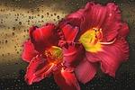 flower, nature, beautiful