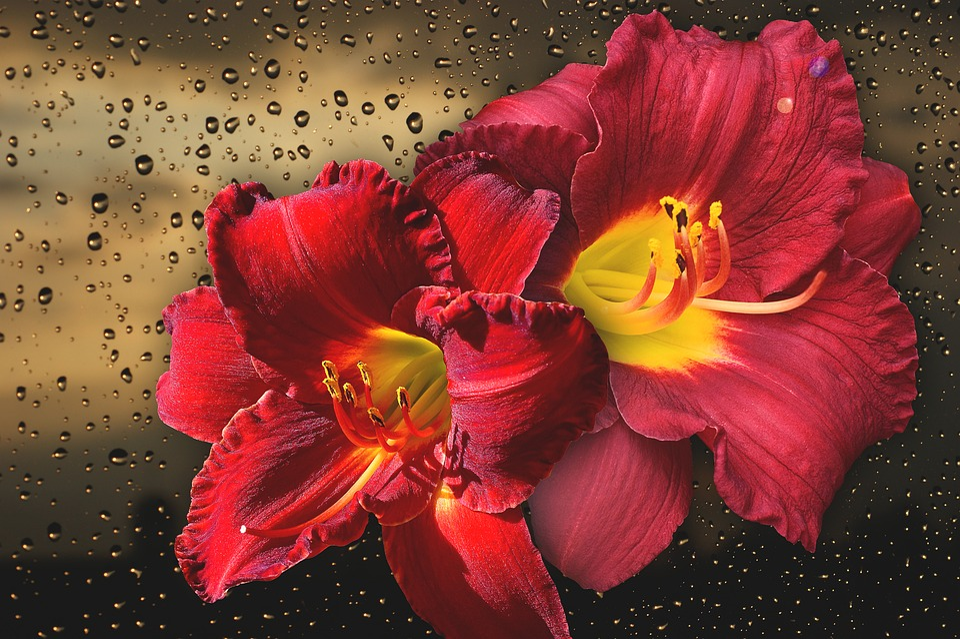 e6b374f0312f Kvetina Príroda Krásna - Fotografia zdarma na Pixabay