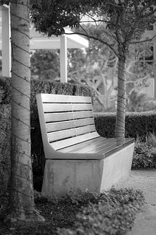 Outdoors, Bench, Wood, Seat, Tree
