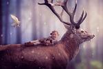mammal, hirsch, animal world