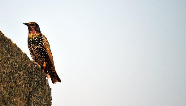 Τέρας πουλί δωρεάν βίντεο