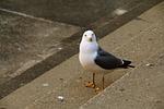 new, seagull