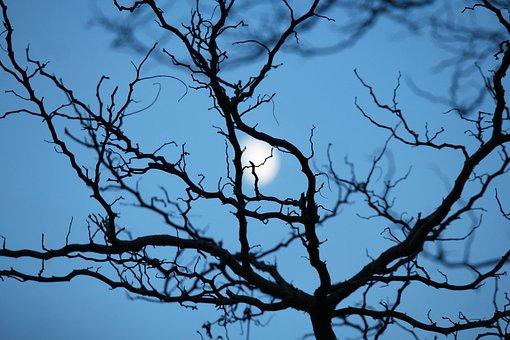 Night, Midnight, Moon, Mountain Garden