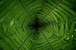 leaf, plant, growth