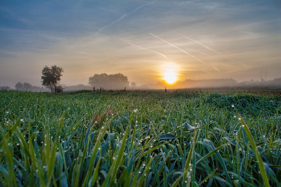 日の出, 太陽, 自然, 草, 朝日, 木, 夜明け, 空, バックライト, 朝, 天国, 霧, フィールド