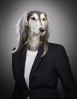 Portrait, Dog, Animal, Suit, Business