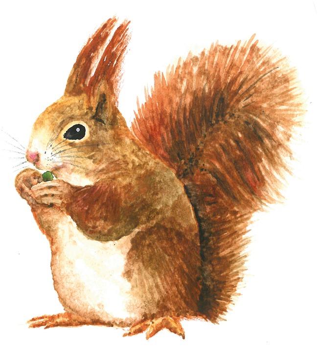 松鼠, 水彩画, 绘图, 可爱, 隔离, 毛茸茸的, 啮齿动物, 动物