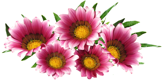Sun Daisy Red Flower · Free photo on Pixabay