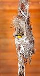 bird, nature