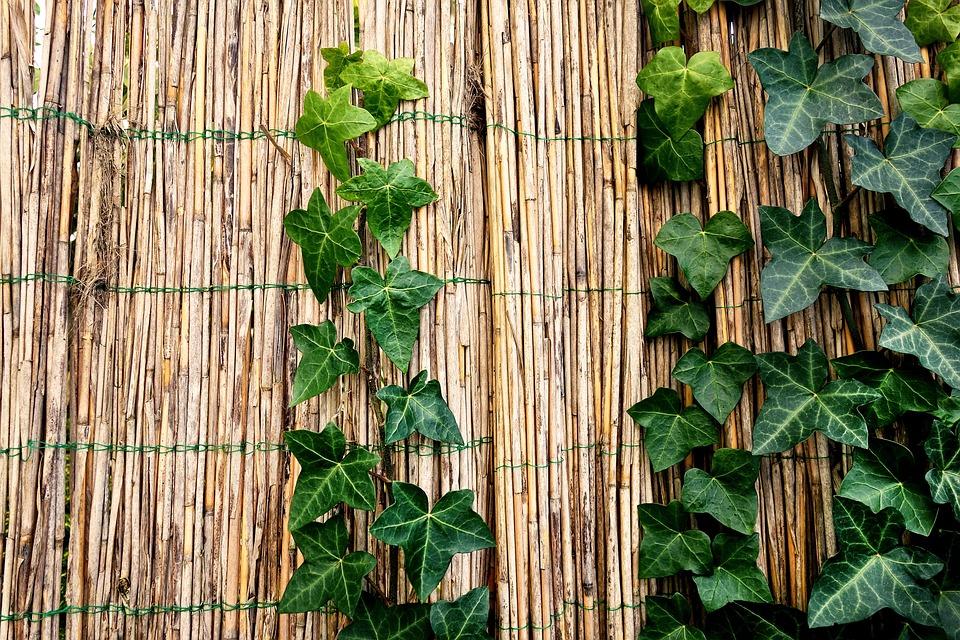 Hegn Bambus Kinesisk Gratis Foto Pa Pixabay