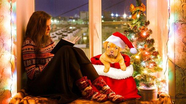 デザイン, クリスマス, 犬, ウィンドウ, 読書, 女性, 祝賀, 人, 冬