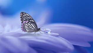 Butterfly, Nature, Insect, Wing