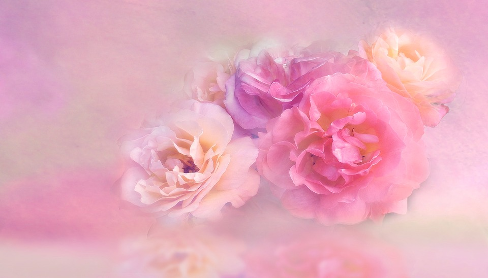 Pink rose images pixabay download free pictures flower floral nature petal roses mightylinksfo