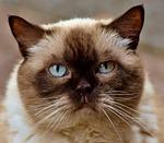 cat, cute