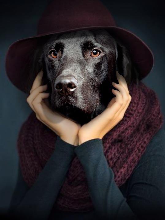 犬, 肖像画, 考える人